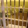 Hongrie prison